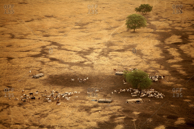 Chad, Zakouma National Park, nomads with their herds of cows around Gara