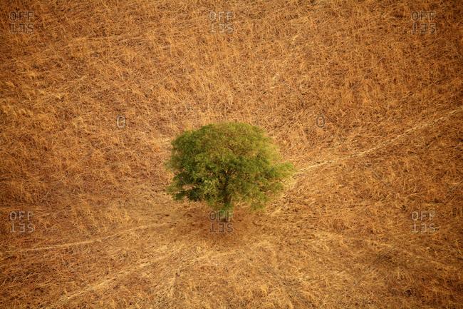 Chad, Zakouma National Park, Acacia desolate in the savannah