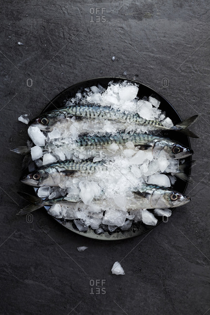 Plate with ice and four sardines on slate