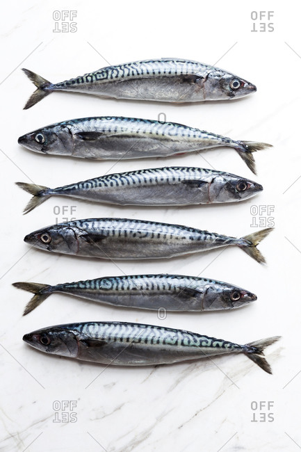 Row of six sardines on white marble