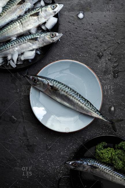 Plates of sardines on slate