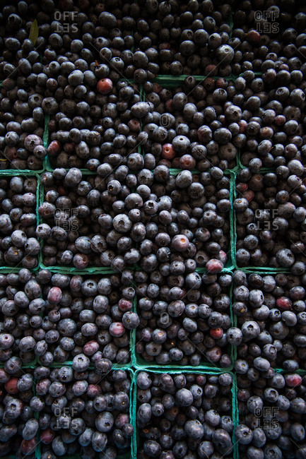 Fresh Maine blueberries in cartons