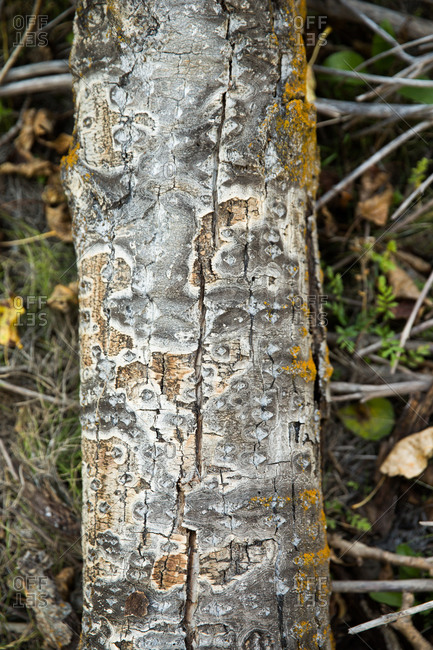Lichen growing on a tree