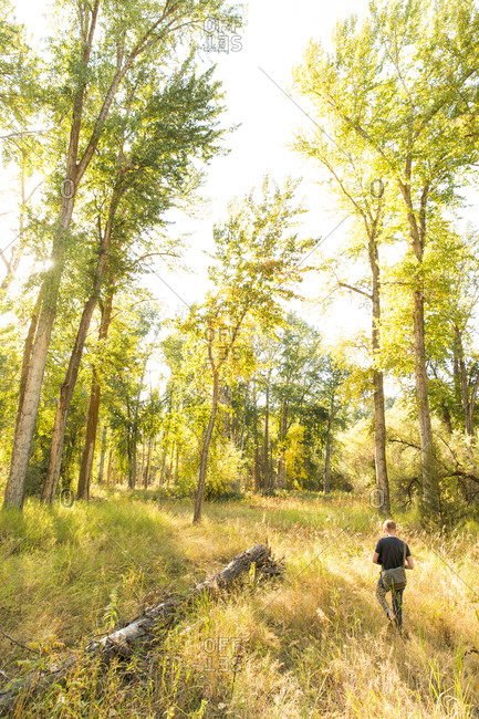 Man in forests of Montana