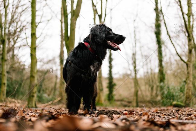 Portrait of a black dog on a hiking trail