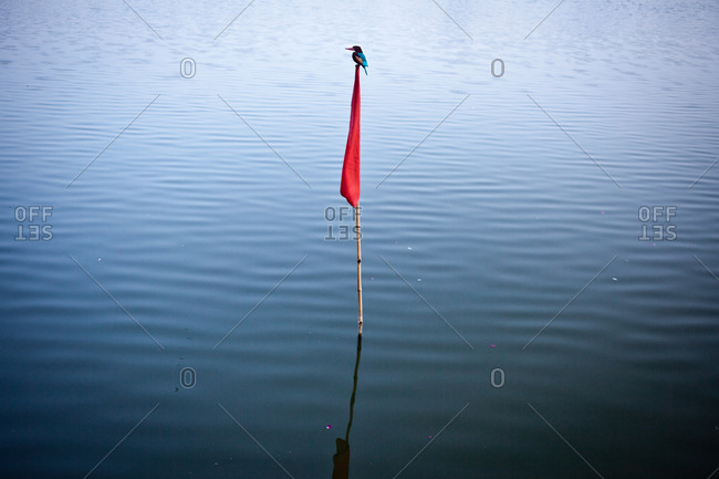 Kingfisher, Pushkar Lake, Rajasthan, India