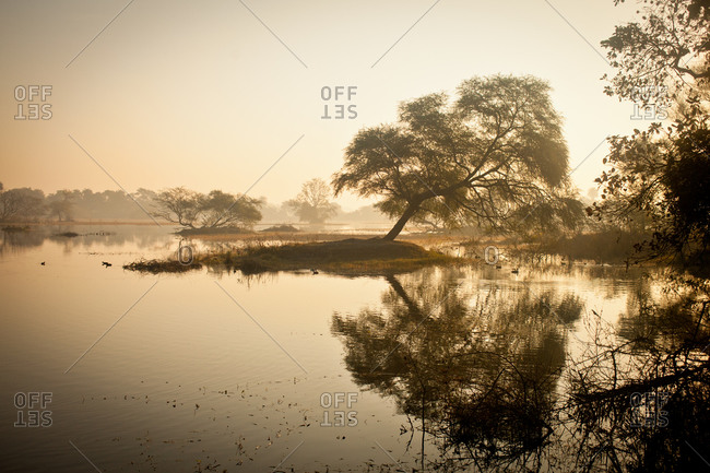 Morning light on a lake in Bharatpur Park, India