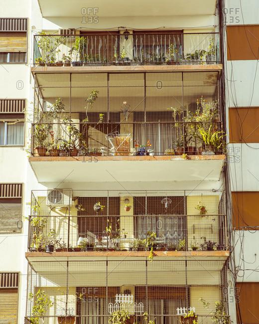 Plants on apartment terraces