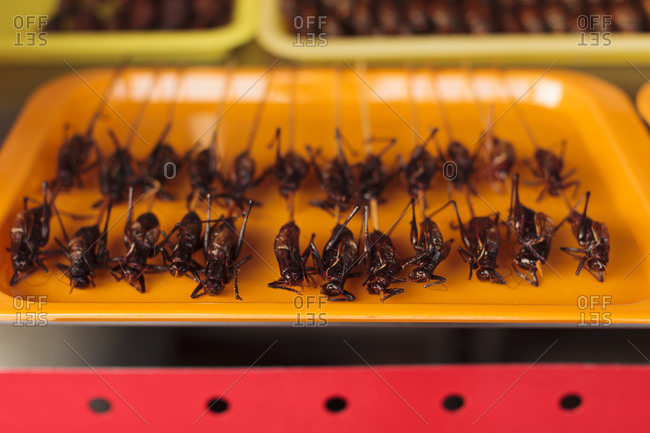 Insects on sticks in China