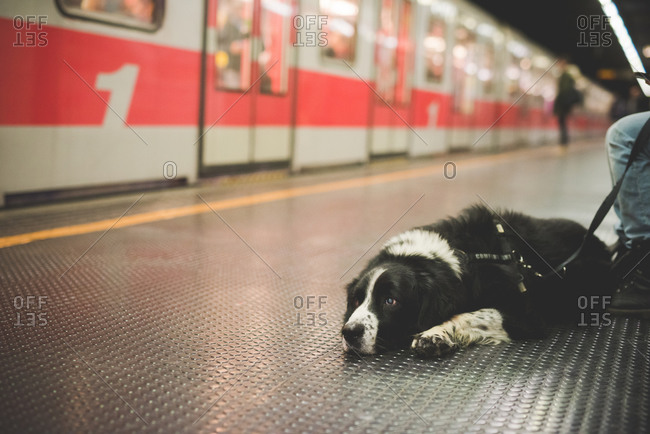 Portrait of dog lying subway station floor