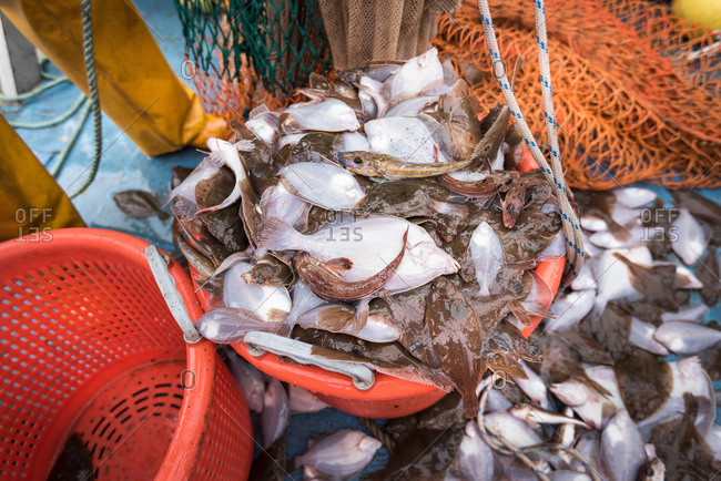 Research scientists and fishermen bring in catch of fish on research ship, close up