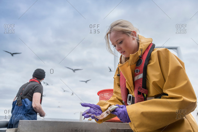 Researchers measuring fish on research ship