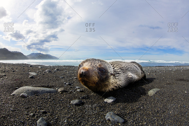 Sea lion lying on the beach