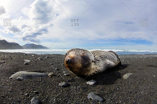 Sea lion lying on the beach