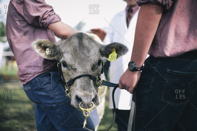 People standing with a cow at a livestock show