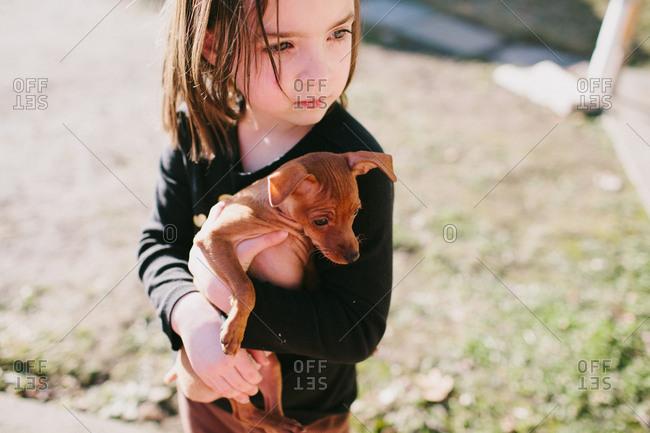 Little girl cradling a min pin puppy