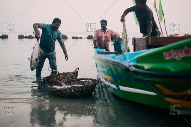 Sri Lanka - March 20, 2016: Men sorting through fish haul