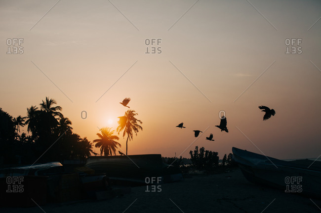 Birds flying over shore, Sri Lanka