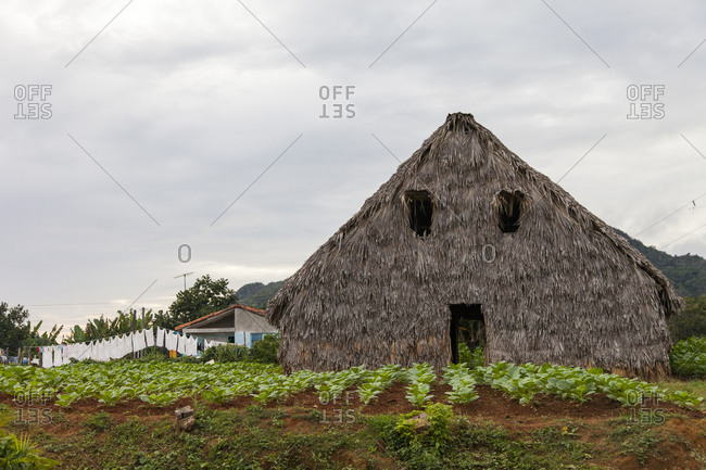 Traditional thatched barn with a garden in front