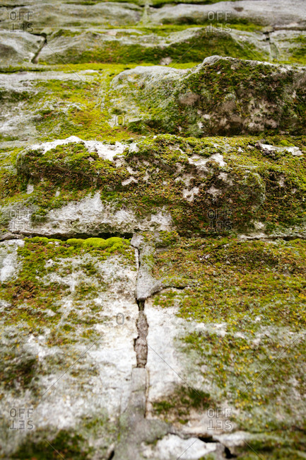 Close-up of a moss covered wall