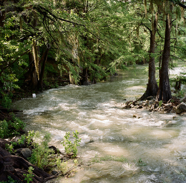 River flowing through woods