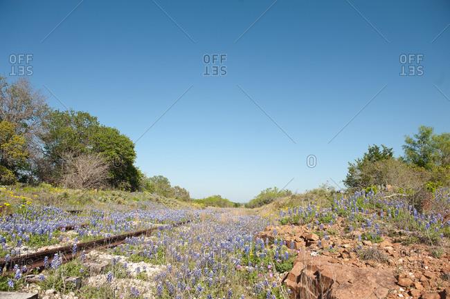 Train tracks through wildflowers