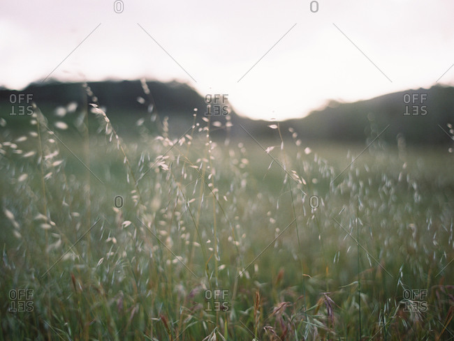 Close-up of grass blades in a field