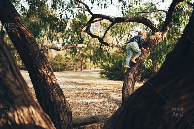 Barefoot boy climbing tree