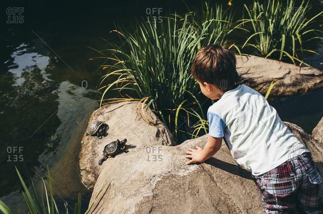 Boy watching turtles on rocks