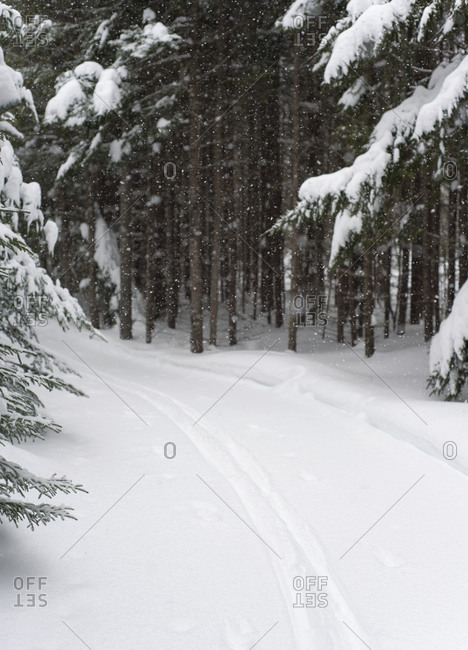 A cross-country ski trail in the woods