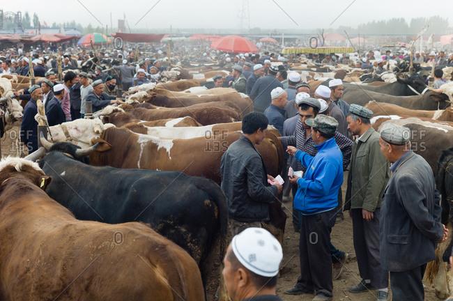 Kashgar, China - May 10, 2015: Farmers examine cattle at auction in Kashgar