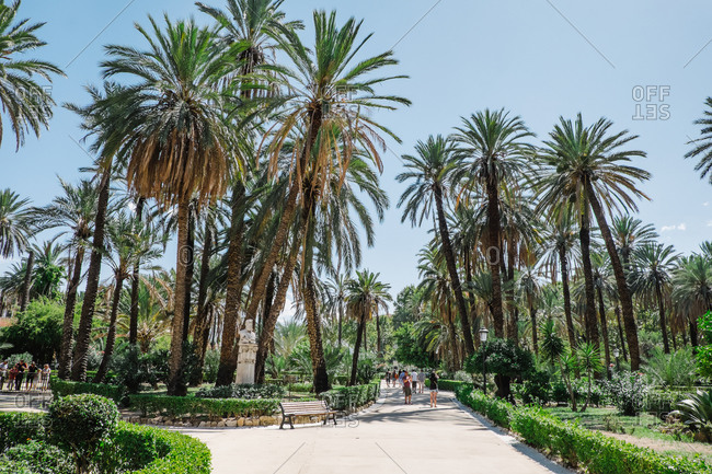 Palermo, Italy - August 16, 2015: Palm trees in a public park in Palermo, Italy