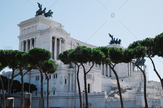 Trees at the Altare Della Patria, in Rome