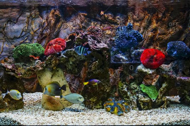 Fish in aquarium with coral