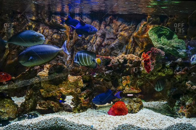 Fish in an aquarium with coral