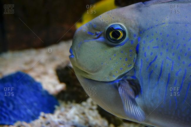 Close up of tropical fish