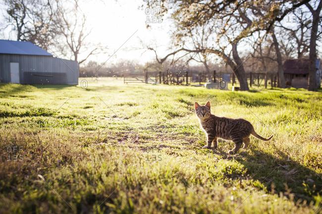 Tabby cat on a farm