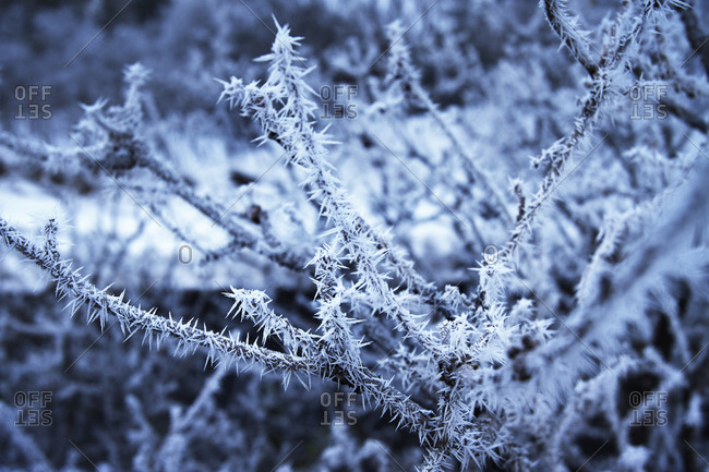 Close up of frost on tree branches