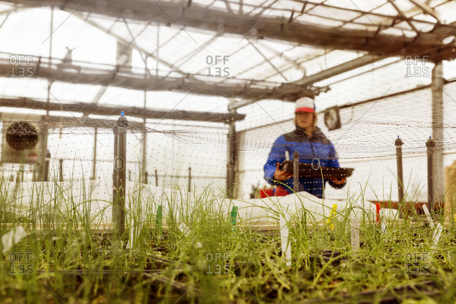 Woman carrying plants in greenhouse