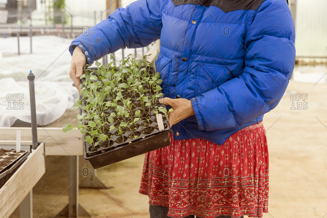 Woman holding plants in greenhouse