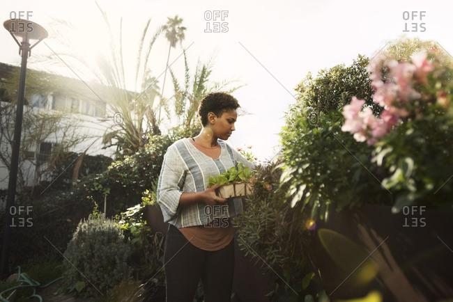 Woman in garden carrying plants