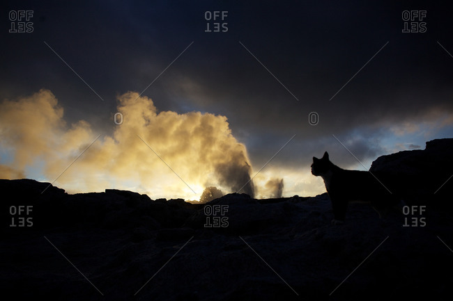 Silhouetted dog watching geyser
