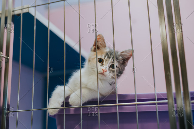 Kitten in a cage