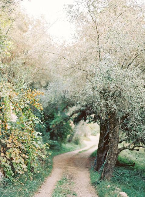 Dirt path along overgrown vegetation