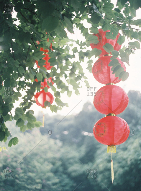 Red paper lanterns hanging from trees