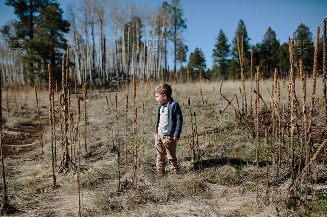 A boy standing in a field
