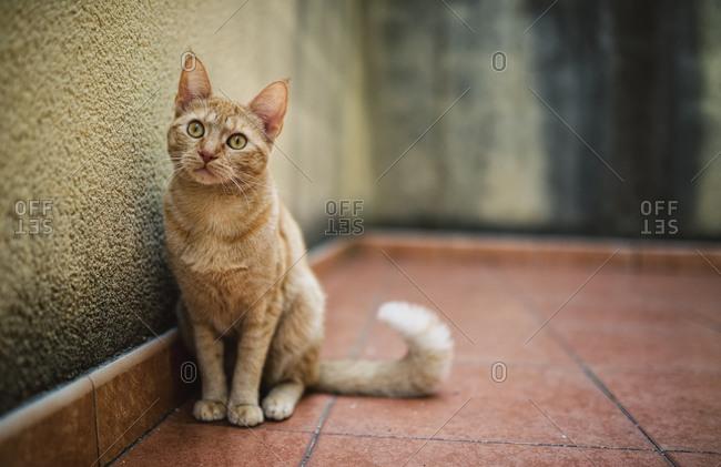 Cat sitting on a terrace