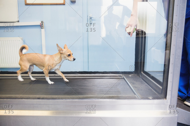 Dog running hydrotherapy treadmill in vets clinic