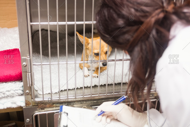 Veterinarian monitoring sick dog in cage at clinic