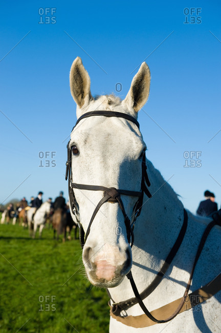 Horse, hunting in background - Offset